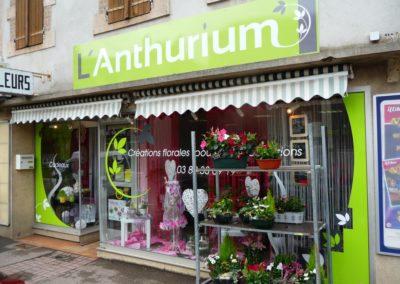 Enseigne bandeau et decor vitrine fleuriste l'ANTHURIUM